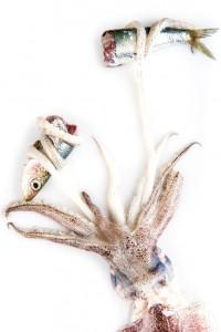 calamar depredador cazando una sardina aislado sobre un fondo blanco